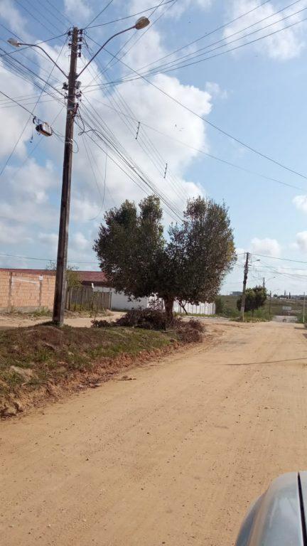 Nota de esclarecimento: Prefeitura não realiza nem autoriza poda de árvores em formato V